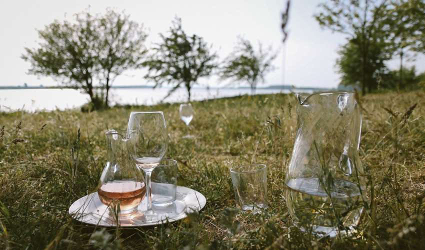 rose-wine-park-picnic